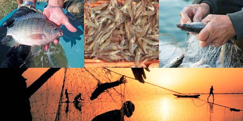 biofloc fish farming In Rajasthan