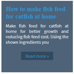 how to make fish feed at home