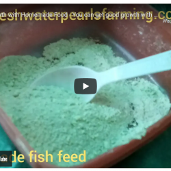 Fish growth with homemade fish food